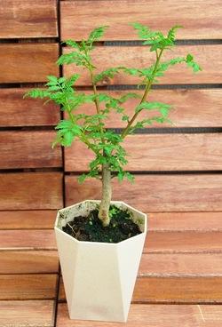 Plants316004